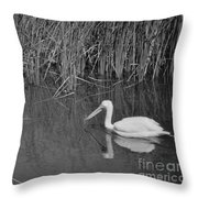 American White Pelican Among Reeds         Minnesota Zoo          Autumn Throw Pillow