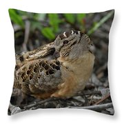 American Woodcock At Rest Throw Pillow