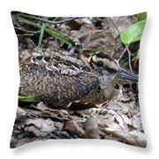 American Woodcock Chick. Throw Pillow
