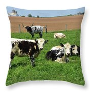 Amish Farm With Spotted Cows And Cattle In A Field Throw Pillow