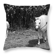 Amish Girl With Her Colt Throw Pillow