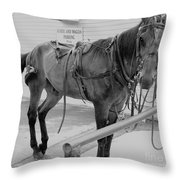 Amish Horse Throw Pillow