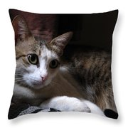 Ammani The Cat Throw Pillow