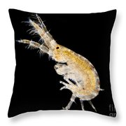 Amphipod Crustacean, Lm Throw Pillow