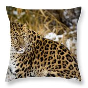 Amur Leopard In A Snowy Forrest Throw Pillow