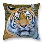Amur Tiger 1 Throw Pillow
