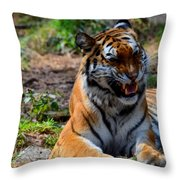 Amur Tiger 3 Throw Pillow