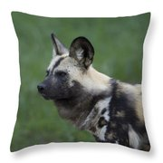 An African Hunting Dog Throw Pillow