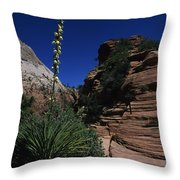 An Agave Plant In The Desert Landscapt Throw Pillow