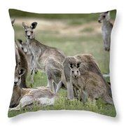 An Alert Mob Of Eastern Grey Kangaroos Throw Pillow