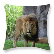 An Amazing Look At A Prowling Lion Standing In Grass Throw Pillow