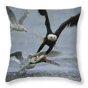 An American Bald Eagle Grabs A Fish Throw Pillow