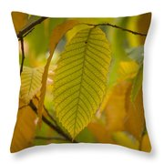 An American Chestnut Tree Castanea Throw Pillow