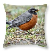 An American Robin With Muddy Beak Throw Pillow
