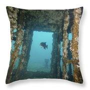 An Atlantic Spadefish Swims Amongst Throw Pillow