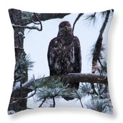 An Eagle Gazing Through Snowfall Throw Pillow