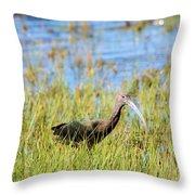 An Ibis In The Grass Throw Pillow