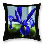 An Irish Iris Throw Pillow