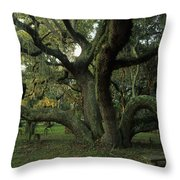 An Old Live Oak Draped With Spanish Throw Pillow