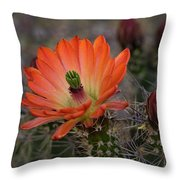 An Orange Beauty Of A Hedgehog  Throw Pillow