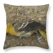 An Orchard Oriole On A Gravel Road Throw Pillow