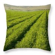 An Organic Carrot Field Throw Pillow