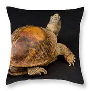 An Ornate Box Turtle With A Fiberglass Throw Pillow