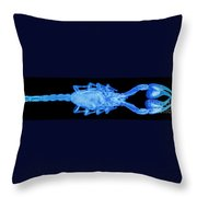 An X-ray Of A Scorpion Throw Pillow