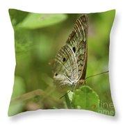 Anartia Butterfly In Wonderland  Throw Pillow