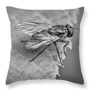 Anatomy Of A Pest - Bw Throw Pillow