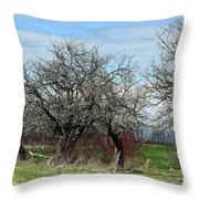 Ancient Apples Budding Out Throw Pillow