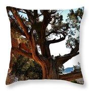 Ancient Juniper Throw Pillow