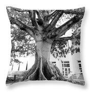 Ancient Kapok Key West Throw Pillow