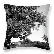 Ancient Oak, Bradgate Park Throw Pillow