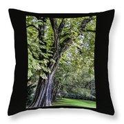 Ancient Tree Luxembourg Gardens Paris Throw Pillow