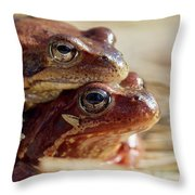 And Then I Found You. European Common Brown Frog Throw Pillow