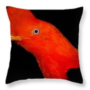 Andean Cock Of The Rock Throw Pillow