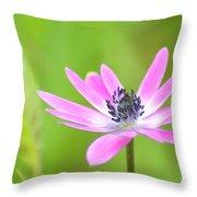 Anemone Stellata Throw Pillow