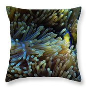 Anemonefish Hiding Throw Pillow