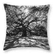 Angel Oak Starbusrt Throw Pillow