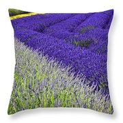Angles In Lavender Throw Pillow