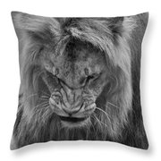 Angola Lion Throw Pillow