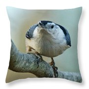 Angry White Breasted Nuthatch Throw Pillow