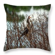 Anhinga Calling Throw Pillow