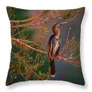 Anhinga Sunset Throw Pillow