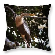 Anhinga Water Fowl Throw Pillow