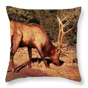 Animal - Elk -  An Elk Eating Throw Pillow