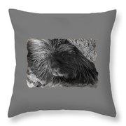 Animal T-shirt - B Throw Pillow
