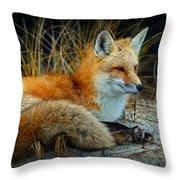 Animal - The Alert Fox  Throw Pillow