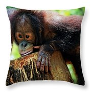 Animals 3 Throw Pillow
